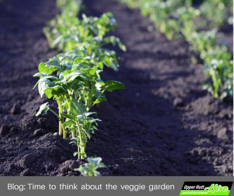 Upper Hutt Hire Rotary Hoe tillage tiller soil earth furrow plant garden borrow rent