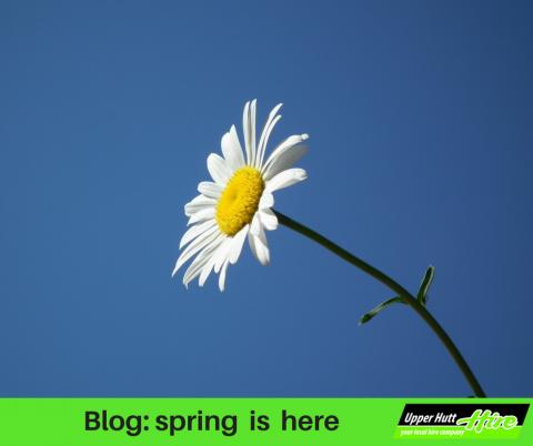 spring gardening lawn grass upper Hutt Hire scarifier