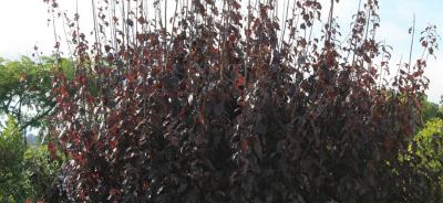 Upper Hutt Hire rent borrow prune blog garden trim