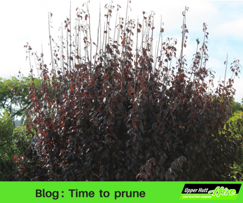 Upper Hutt Hire rent borrow prune blog garden trim