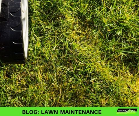 Upper Hutt Hire Lawn scarifier corer maintenance Hirepool Kennards